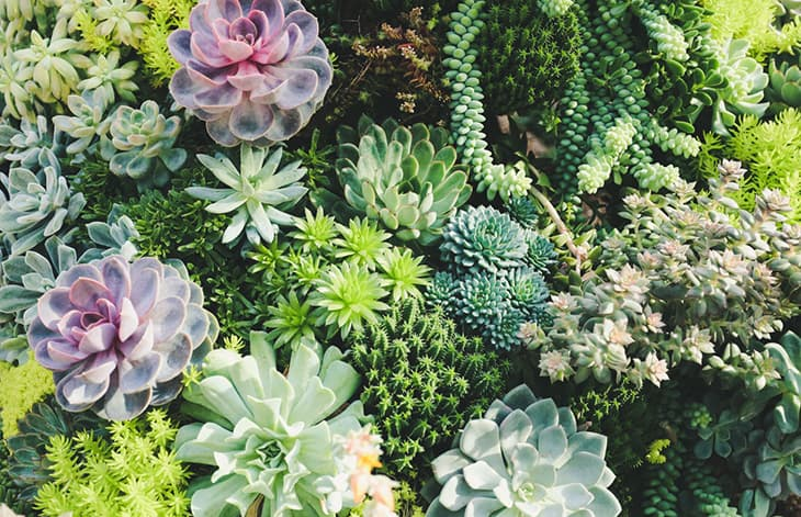 a variety of succulents cared for together