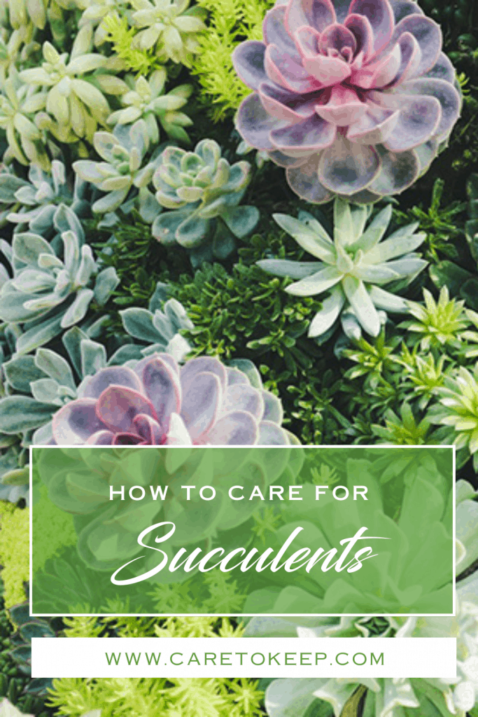"""different varieties of succulents fill the image. A green, transparent box and a white box overlay the bottom of the image. White and green text in the boxes reads: """"How to care for Succulents — www.CareToKeep.com"""""""