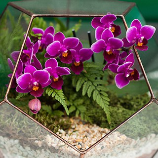 Small pink orchids growing in a class container with metal rim