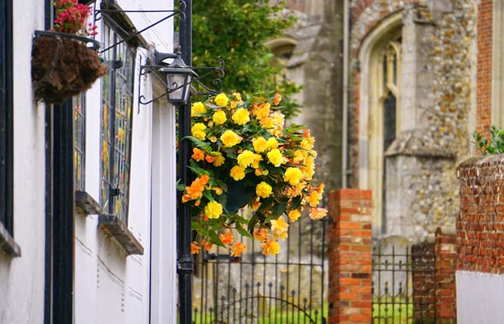 Hanging basket of yellow flowers on the side of a building