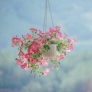 hanging pot of pink flowers on a  light blue background