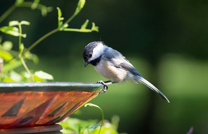 a blue and white bird perched on the edge of a birdbath