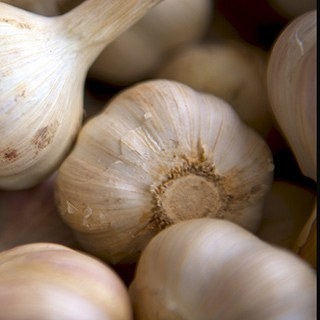 close up of garlic bulbs