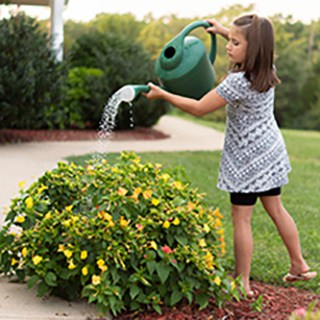 A child watering a yellow flowering bush with a green watering can