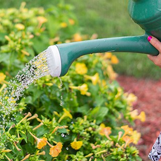 green watering can watering a yellow flowering bush