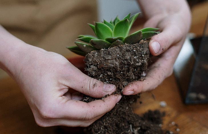 close up of a person's hands repotting a succulent