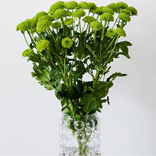 green mums in a vase