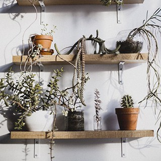 potted plants on wooden shelves against a white wall