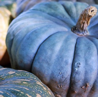 blue hubbard squash beside other winter squash