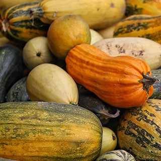 different winter squash varieties stored in a pile