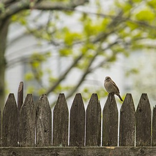 a bird sitting atop a wood fence with a tree in the background