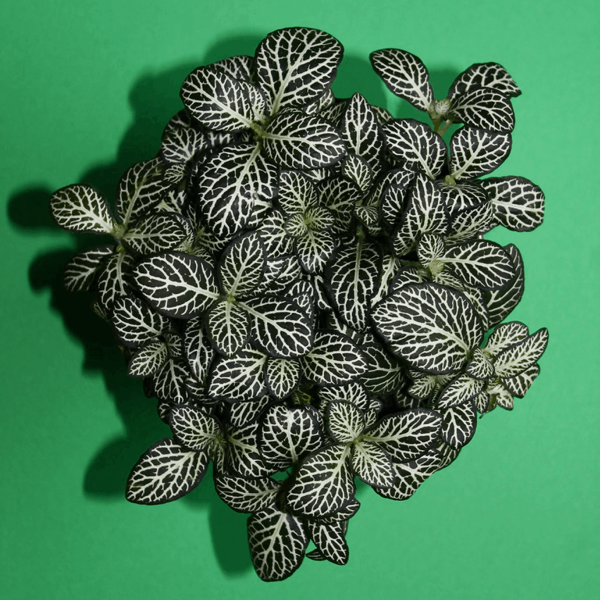 aerial view of a nerve plant on a green background
