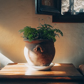 a plant in a rounded clay planter sitting on a small wood table in front of black-framed pictures on a beige wall
