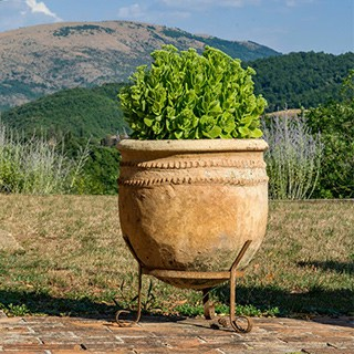 A green plant in a large, rounded planter on a metal stand.