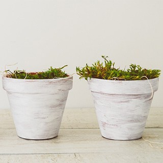 two white painted flowerpots with low green plants in them
