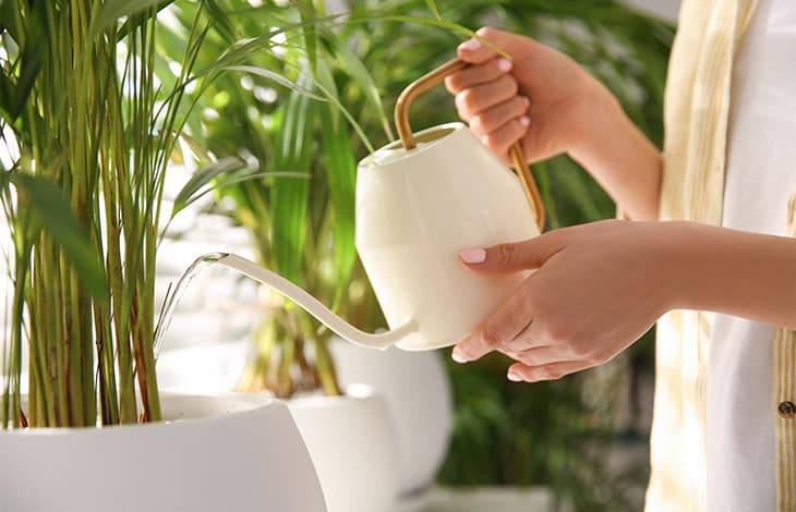 a person's torso and hands watering houseplants with a small white and gold watering can