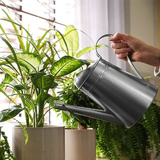 a hand holds a silver watering can, watering plants on a windowsill