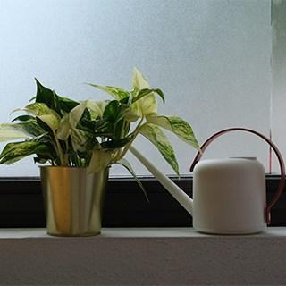a pathos in a gold pot next to a white watering can on a shaded shelf