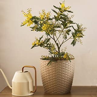 houseplant growing in a wicker pot next to a white watering can with a gold handle on a wood table