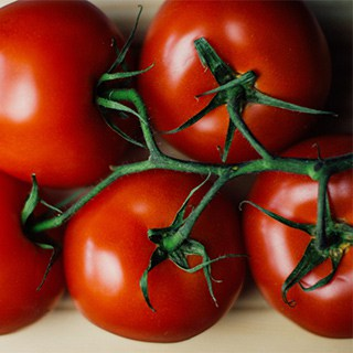 a few red tomatoes still on the vine