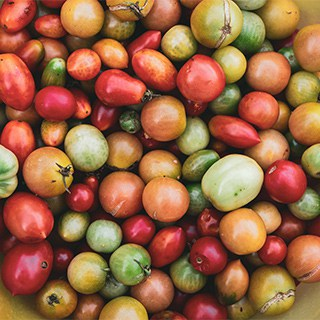 a pile of tomatoes of different types and varieties